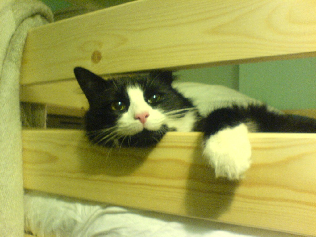 Our beloved cat - when we had a 'loft-bed' (purrfect for surverying everything from...)